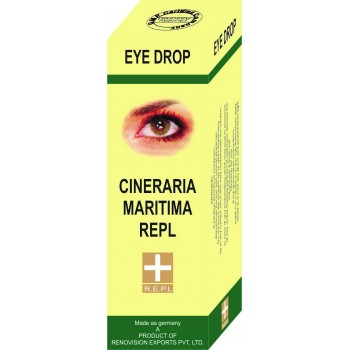 Cineraria Maritima